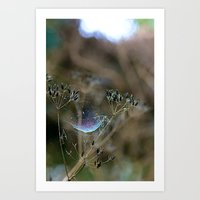 Spiderwebs And Raindrops Art Print