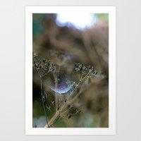 Spiderwebs and Raindrops Art Print