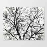 THE COLOR OF WINTER Canvas Print
