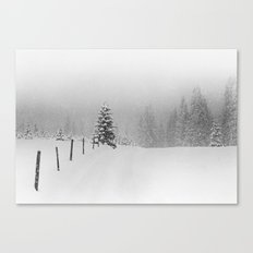 Grey Hounds Canvas Print