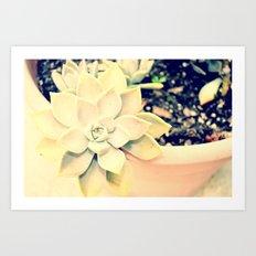 WhiteFlower Art Print