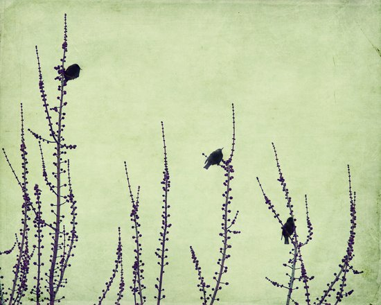 three birdies Art Print