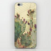 Glass House Cactus iPhone & iPod Skin