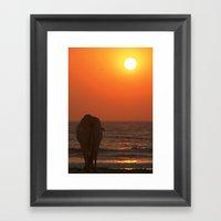 Cow Watching The Sunset … Framed Art Print