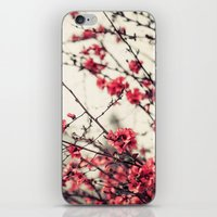 Printemps Rose iPhone & iPod Skin