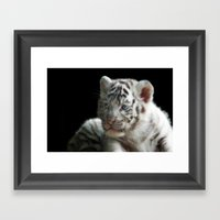 White Tiger Cub Framed Art Print