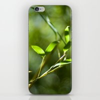 Bamboo Shadows iPhone & iPod Skin
