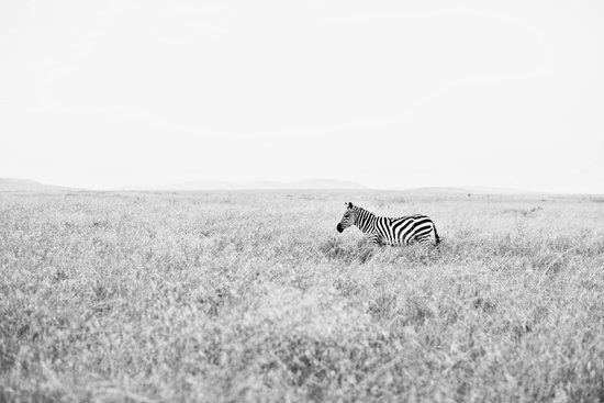 into the wild::kenya Art Print