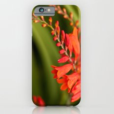 Blooming Reds iPhone 6 Slim Case