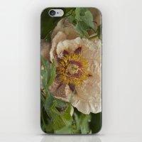 Marmalade  iPhone & iPod Skin