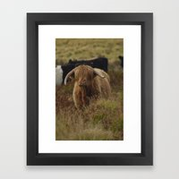 Highland Cow Exmoor Framed Art Print