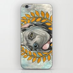 Cane Corso dog iPhone & iPod Skin