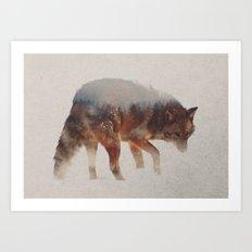 Coyote In The Fog Art Print