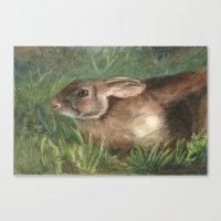 Shy Rabbit Canvas Print