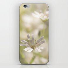 White Tender Blossoms iPhone & iPod Skin
