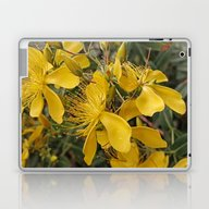 Laptop & iPad Skin featuring Beautiful St Johns Wort by Wendy Townrow