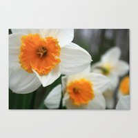 Spring Lovelies Canvas Print