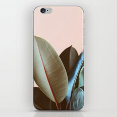 Ficus Elastica #1 iPhone & iPod Skin