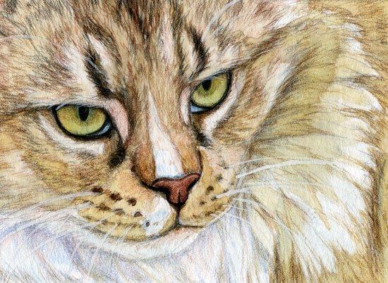 Maine coon cat - Soft portrait 725 Art Print