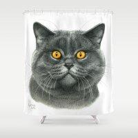 British Shorthair Cat  G… Shower Curtain