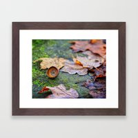 Shaking down the acorns Framed Art Print