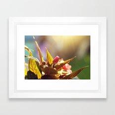 Summer Light II Framed Art Print