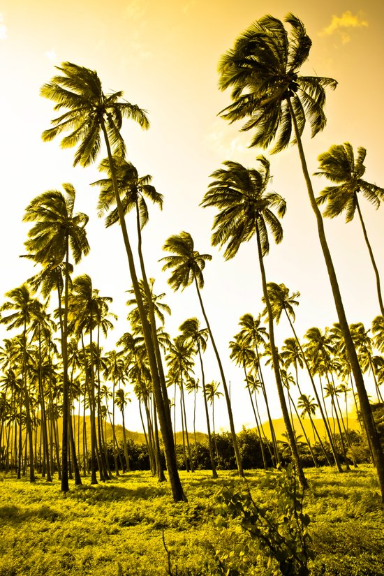 Golden Palms Art Print