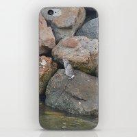 Lone Cat iPhone & iPod Skin