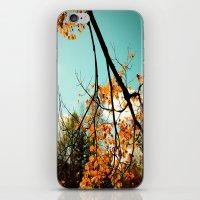 Colors of Fall iPhone & iPod Skin
