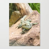 Lizard's Rest Canvas Print