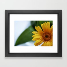 Yellow Gerbera Framed Art Print