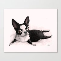 The Little Fat Boston Terrier Canvas Print