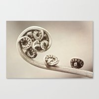 Circles of Life Canvas Print