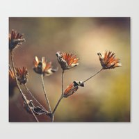 The Colors of Autumn Canvas Print