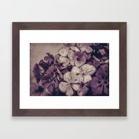 Geraniums -- Monochrome … Framed Art Print