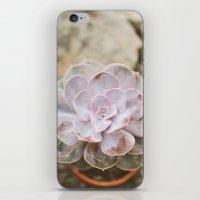SOLO SUCCULENT  iPhone & iPod Skin