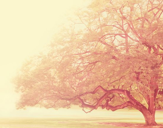 tree. That Was Just a Dream. pink tree photograph Art Print