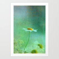 Camomile bloom along the way Art Print