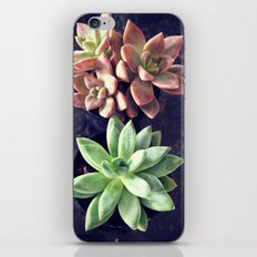 Succulents  iPhone & iPod Skin