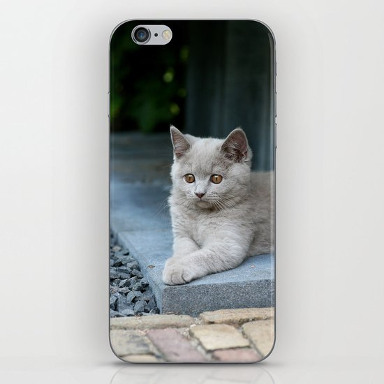 Bikkel the cat ! iPhone & iPod Skin