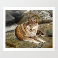 Wolf by the Riverbed Art Print