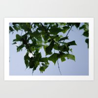 Beautiful Green Leaves From Above Art Print