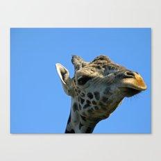 Giraffe 2 Canvas Print