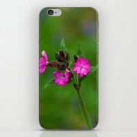 Wild Flower iPhone & iPod Skin