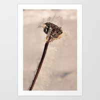 Frostbite Art Print