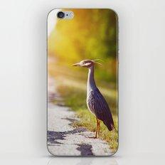Night Heron Waiting for His Ride iPhone & iPod Skin