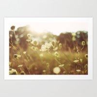 Summers Light Art Print