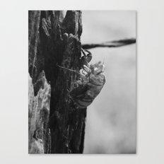 cicada shell 2016 Canvas Print