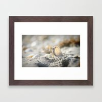 A Shell Framed Art Print