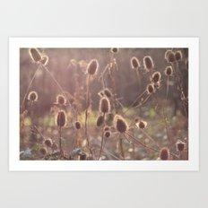 Wild Thistles Art Print